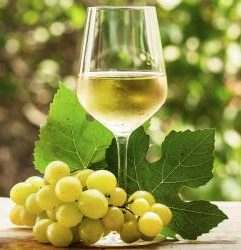 Witte Wijn